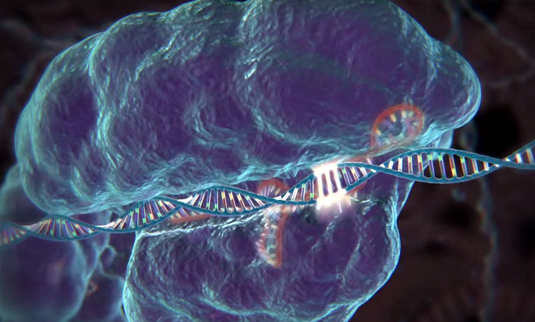 the corruption of the human species through the manipulation of genes