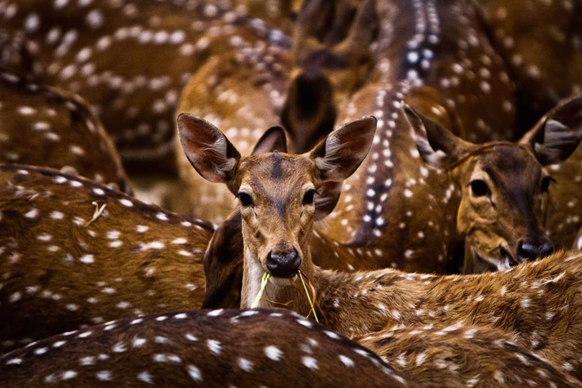Sony World Photography Awards 2012: Nature, Wildlife and the Environment