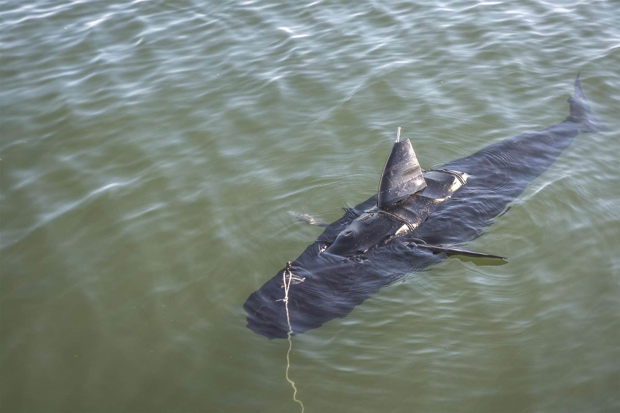 Photos: Meet the US Navy's drone shark
