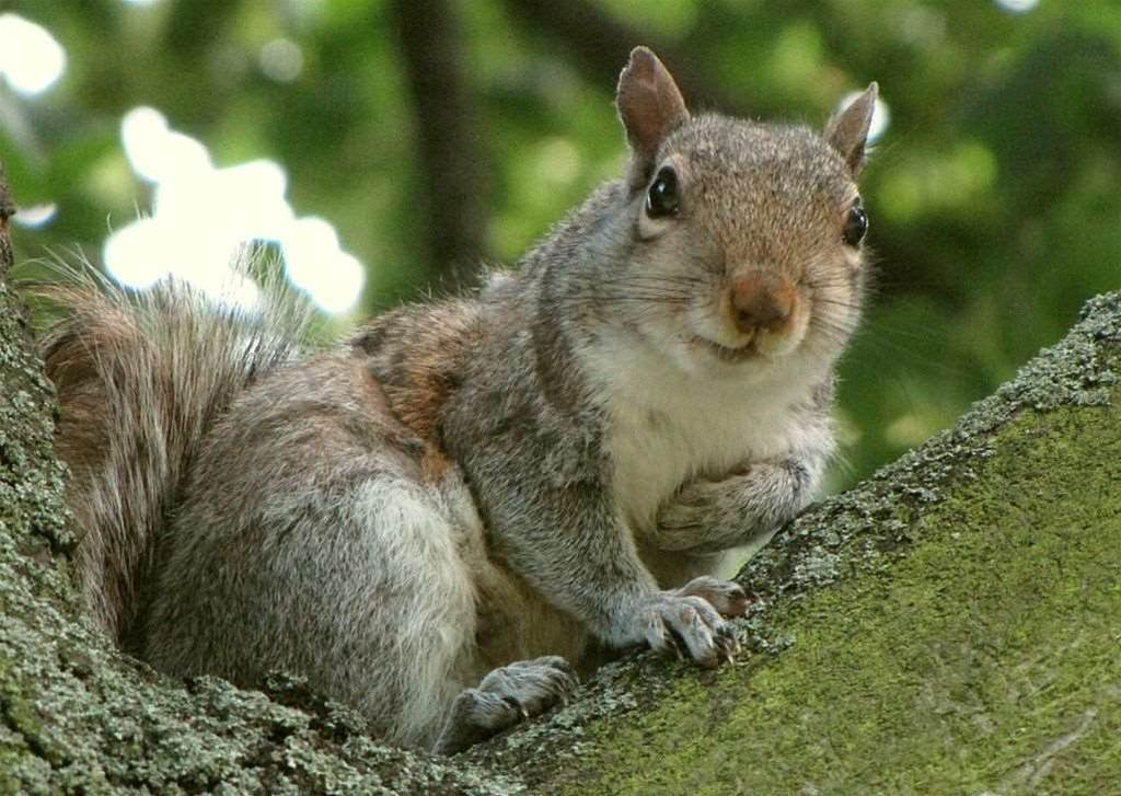 The world's most prolific national grid hackers have nothing on squirrels