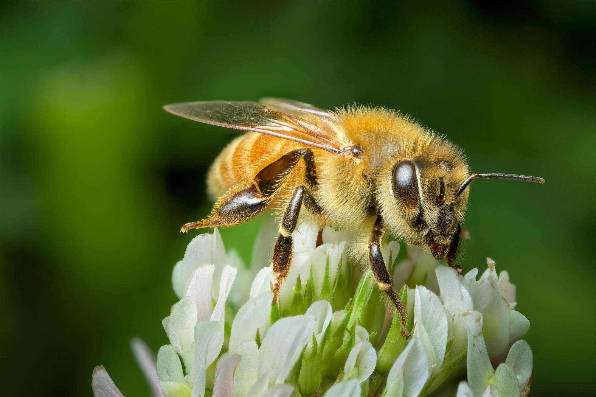 Oslo Builds Bee Highway To Save Precious Pollinators