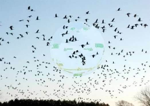 Birds Might Have a Built-In Heads-Up Display Overlaying Navigation Data Onto Their Vision