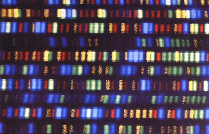 Your Full Genome Can Be Sequenced and Analyzed For Just $1,000