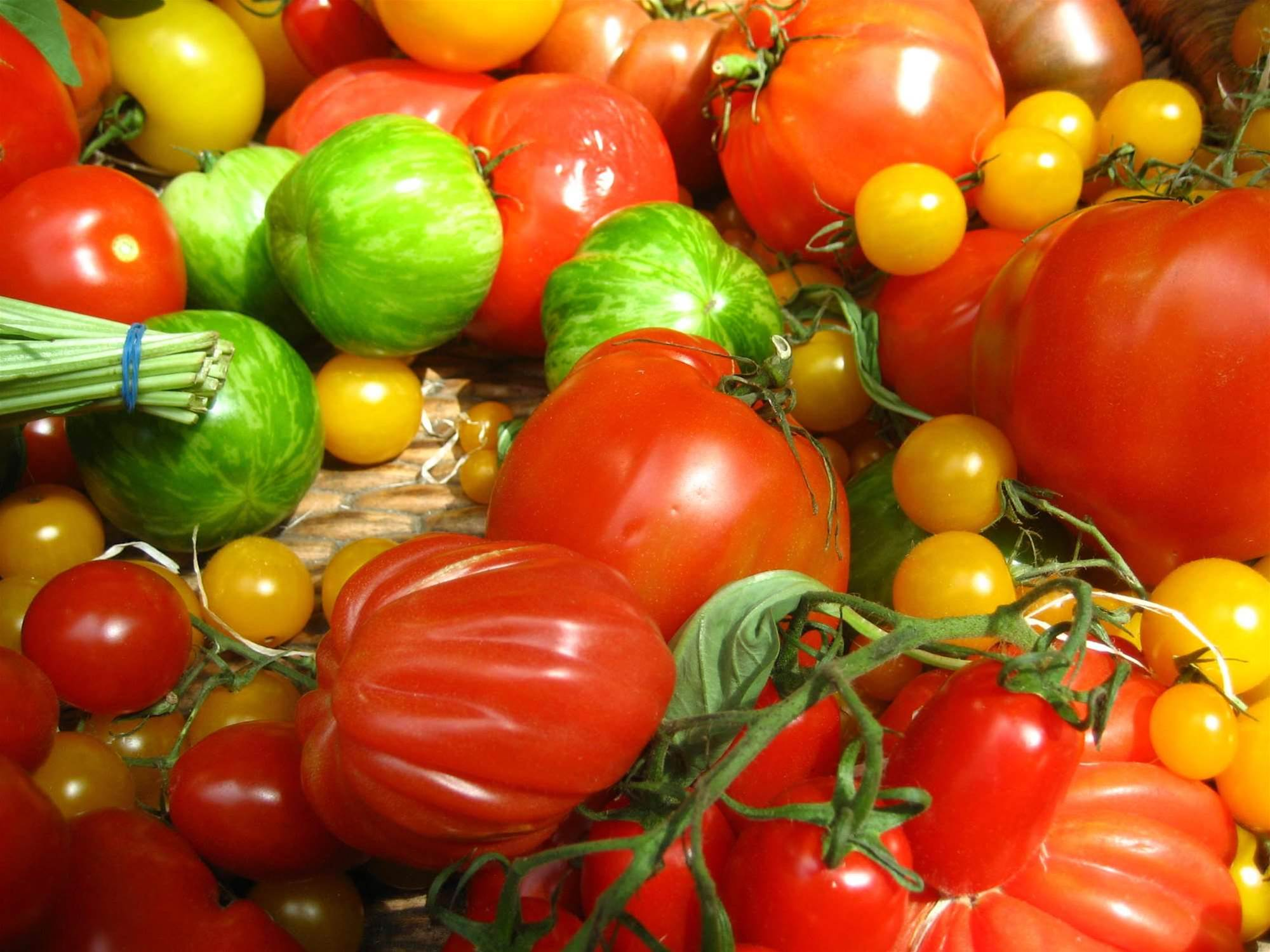 Damaged Tomatoes Could Provide Electricity