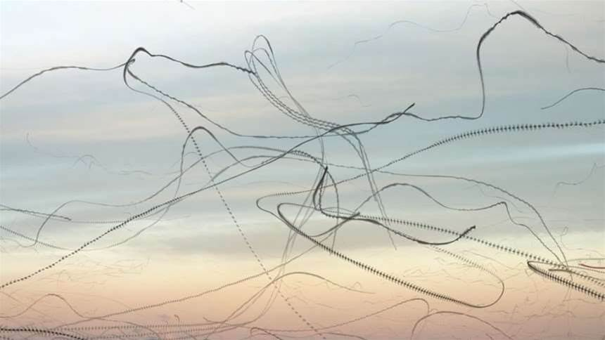 Bird flight patterns become alien scribbles in eerie photo series