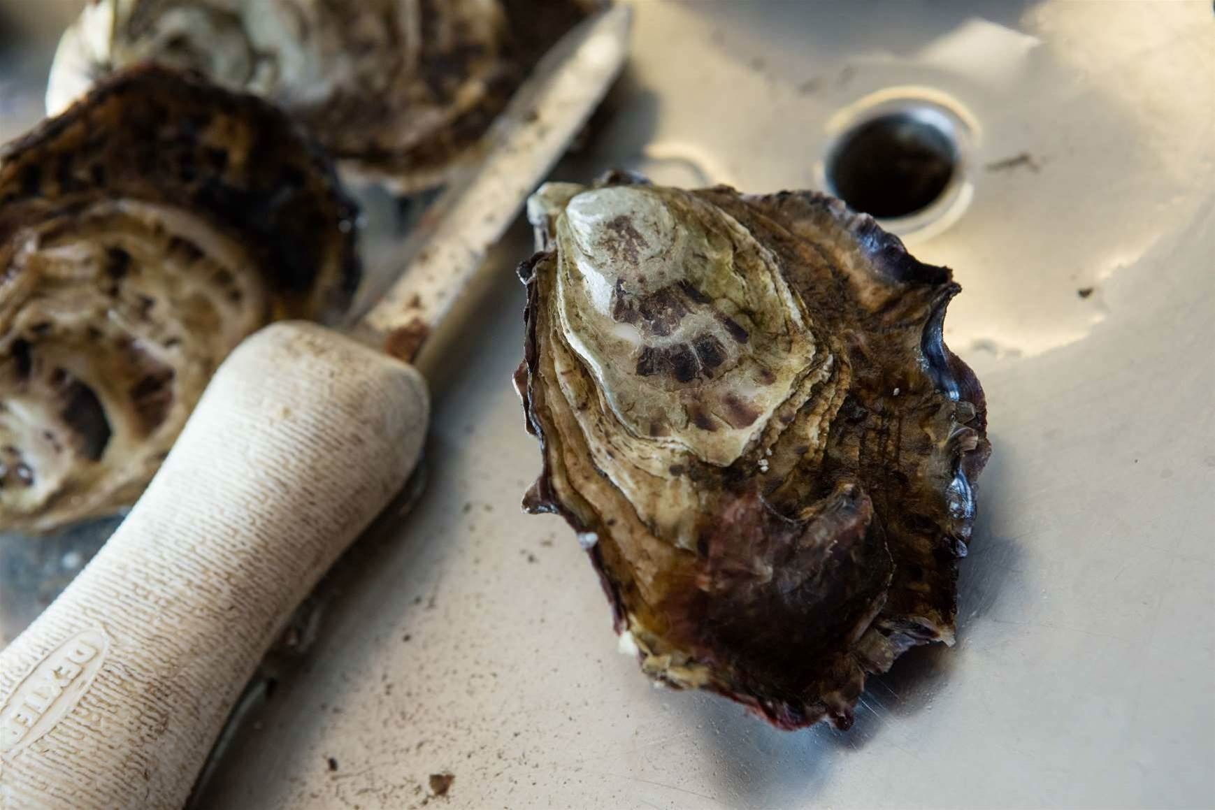 How IoT is helping Tasmania's oyster industry