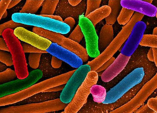 Our Modern Lifestyle May Be Destroying Microbiome Diversity