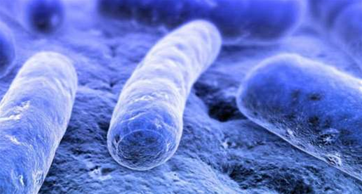 New Social Network Connects People Based on Gastrointestinal Bacteria