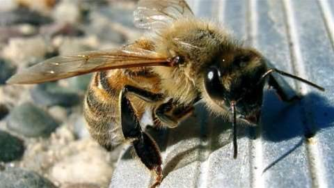 Bees protected with world's first nature project