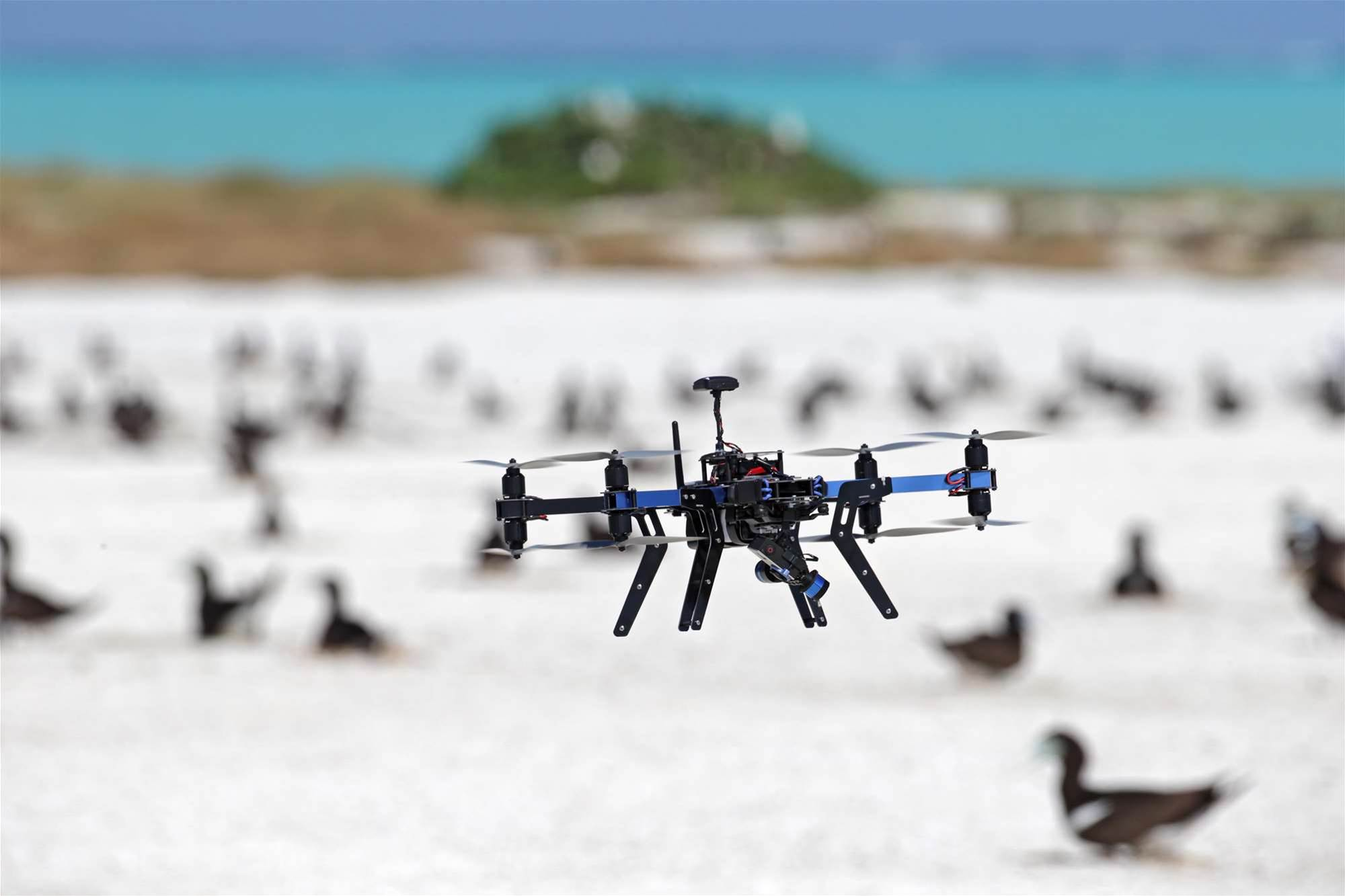 Drones Are Great At Counting Birds, Study Finds