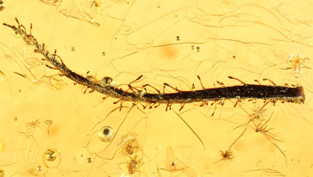 Found: An Insect-Eating Plant Sealed In Amber