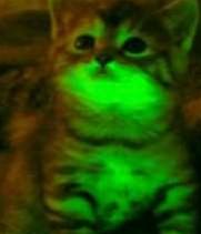 Biohacking: Why is my kitten glowing?