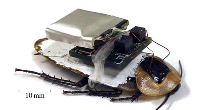 Cyborg Cockroaches Now More Reliable Than Ever