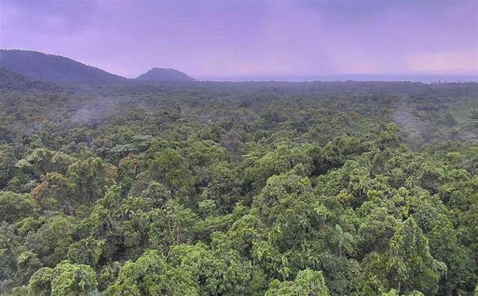 James Cook Uni connects the Daintree rainforest to the NBN
