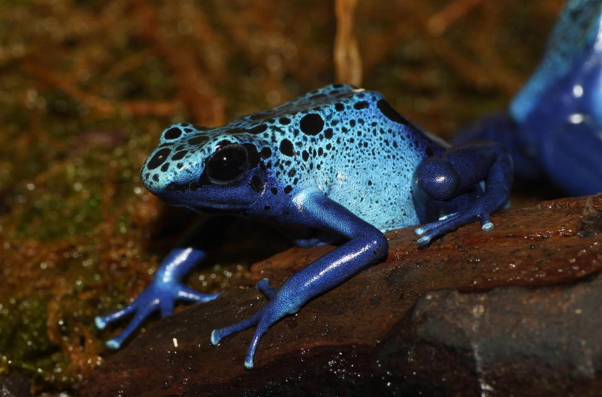 An Ice-Proof Coating For Aeroplanes Based On A Frog's Skin
