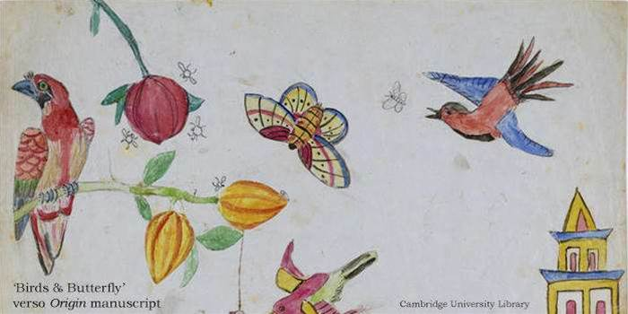 155 Years Later, Darwin's Manuscripts Are Going Digital