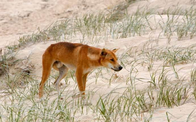 Drones to stop SA farmers being hounded by wild dogs