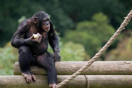 NAB deploys Chaos Monkey to kill servers 24/7