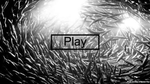 Program That Mimics Fish Schooling Fools Fish Experts