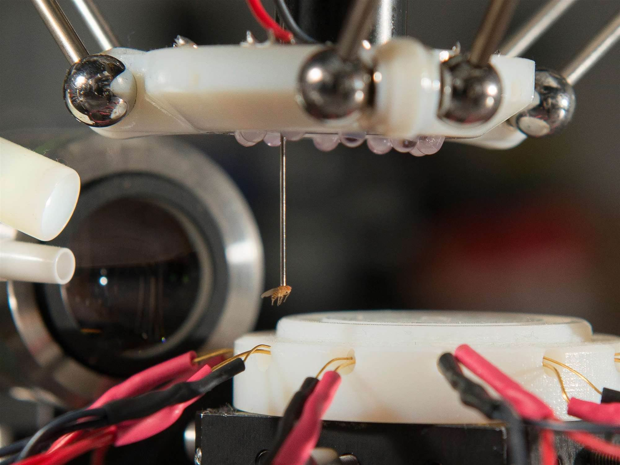 This Robot Can Suck Up Fruit Flies Like A UFO