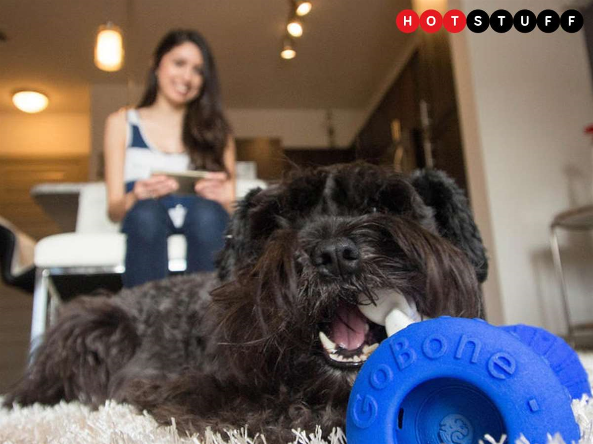 GoBone: give a dog a robo-bone after you come rolling home