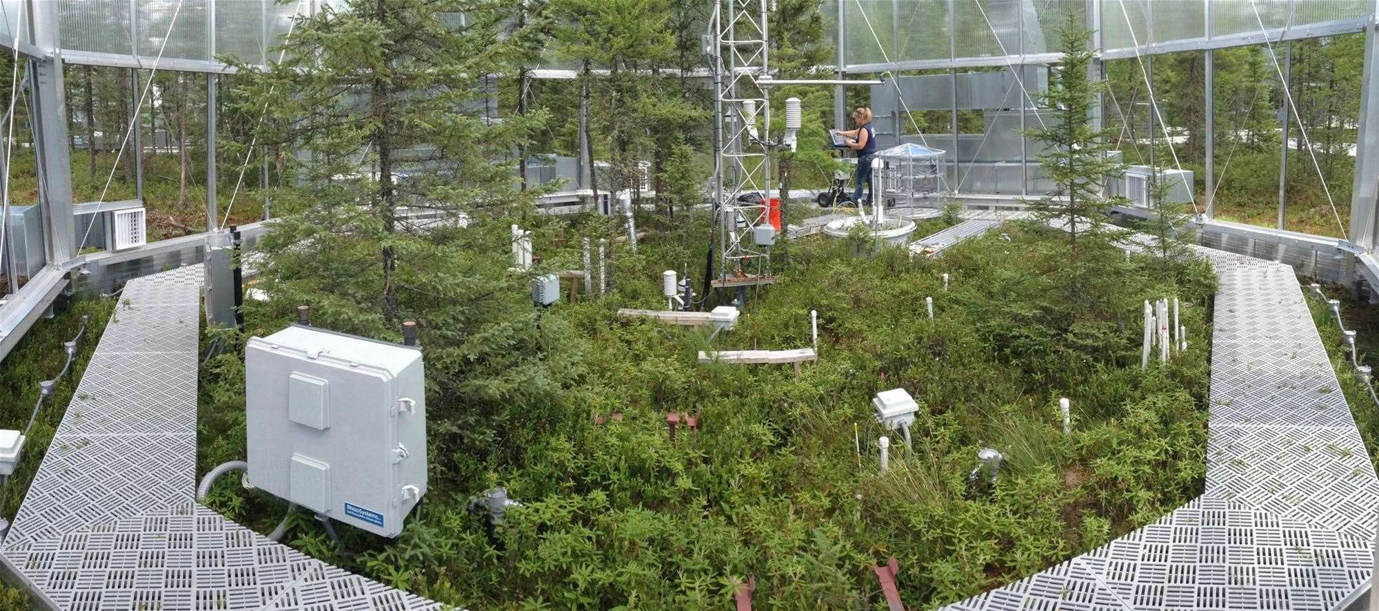 Caged Wetlands Could Show The Future Impacts Of Climate Change