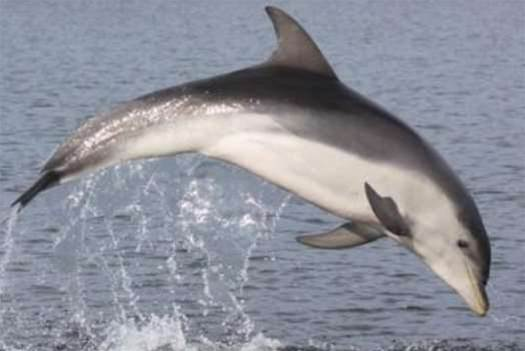 New Species of Dolphin Discovered Off the Coast of Australia
