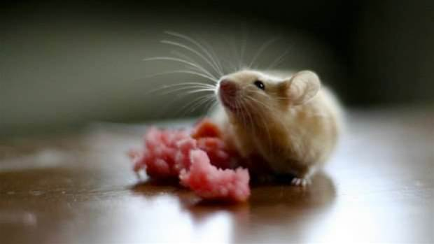 Mice get their vision back with regrown neurons