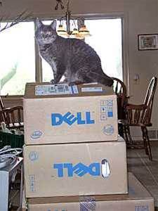 """Dell slapped over """"express"""" warranties"""