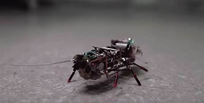 Russia Shows Off Robotic Cockroach