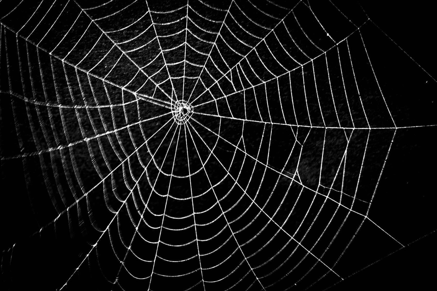 Energy Australia's 'spiderweb' systems problem