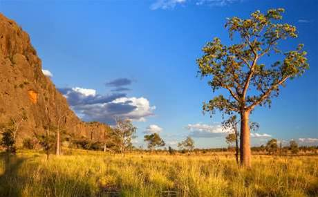 Sydney's CMS IT goes bush with 21-site outback rollout