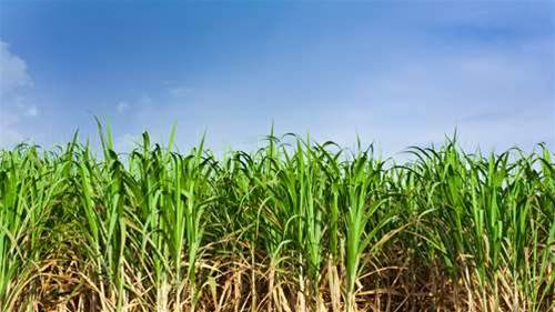 Queensland Sugar plots storage swapout