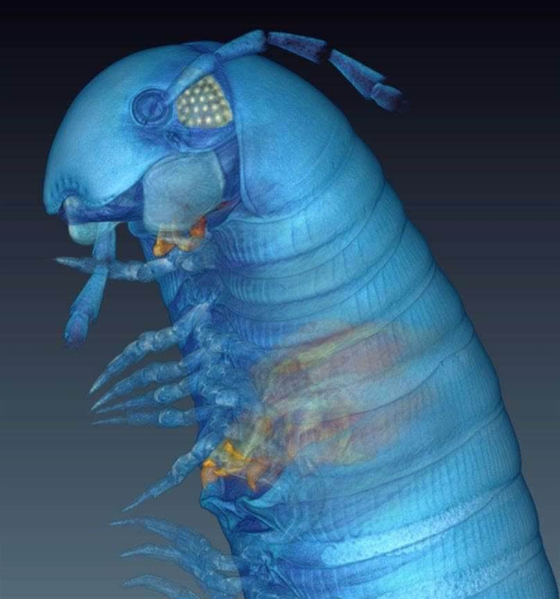 CT Scans Can Help Classify Even The Tiniest Creatures