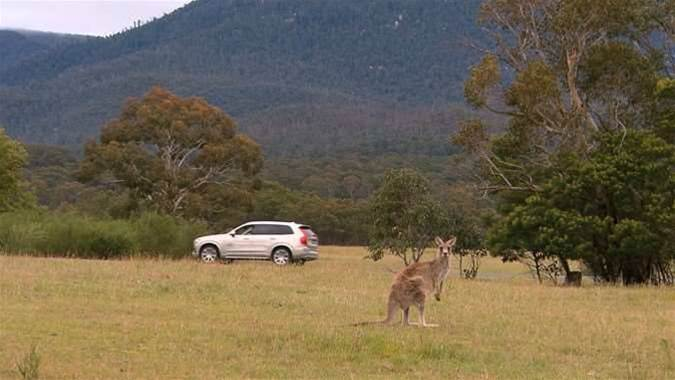 Volvo testing kangaroo-avoidance technology in Canberra