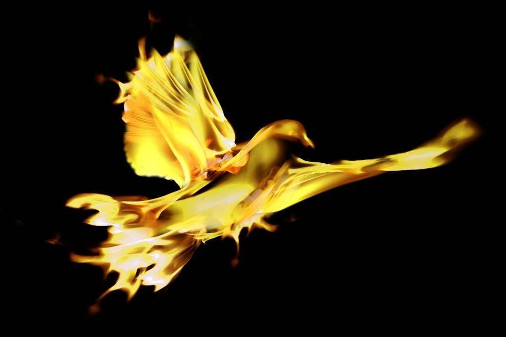 'Phoenix' burned in $100k software copyright bust