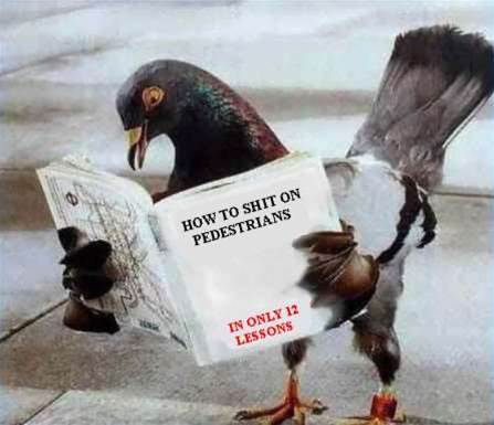 Australian internet fails pigeon test