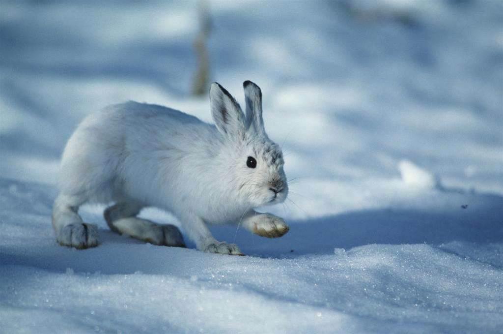 VMware's SpringSource snares UK-based Rabbit