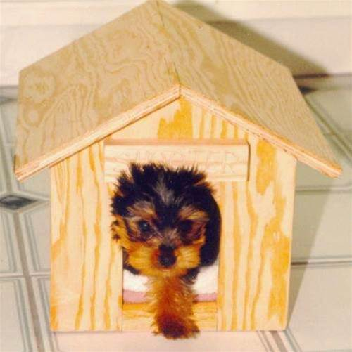 ID thief in the doghouse after puppy scam