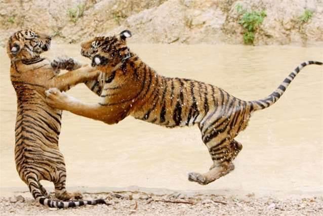 Mozilla to drop Mac OS Tiger support