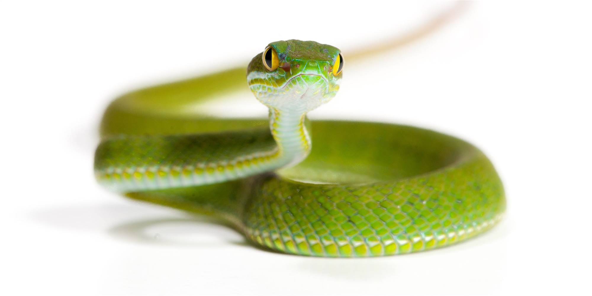 The Snake Diet Is the Latest Insane Weight Loss Trend You Definitely Should Not Try