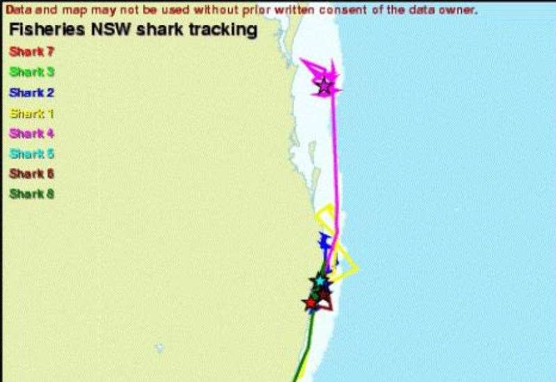 Public Now Able To Track Tagged Sharks On NSW North Coast - Tracks ...