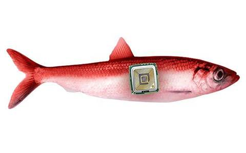Amid the hype, is IoT really a red herring?