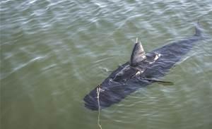 Photos: Meet the US Navy's drone shark