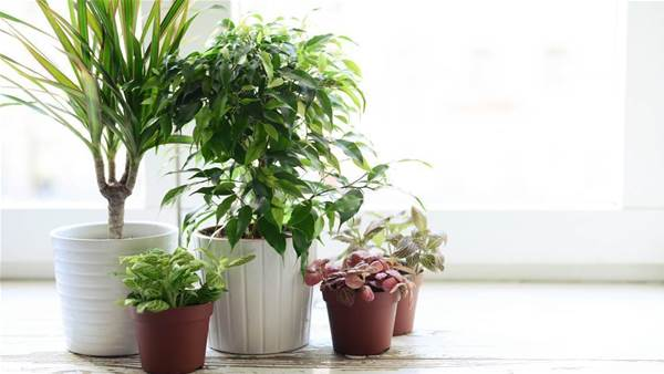 10 Low-Maintenance Houseplants You Only Have To Water Once A Month