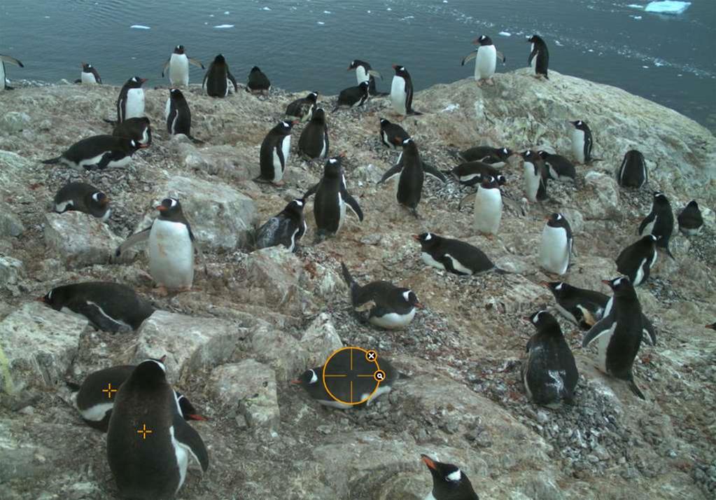Clever penguins could make smart cars smarter