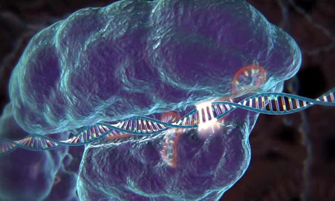 New, Alternative CRISPR Enzyme Could Make Genetic Edits More Precise