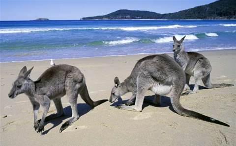 'Tech Kangaroos': scammers mimick cybersecurity vendors
