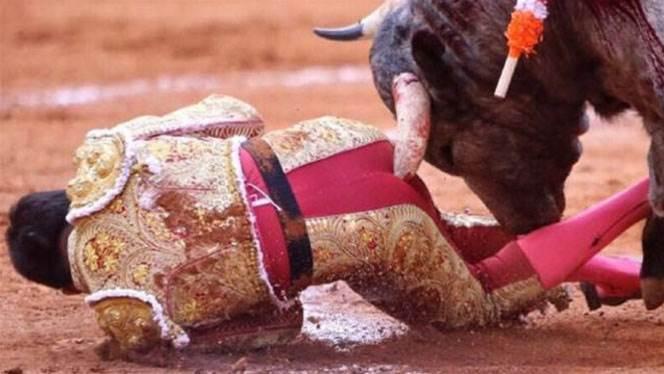 Bullfighter gored 29cm in backside