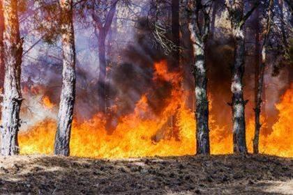 Wildfire destroys Hewlett Packard's 79-year history